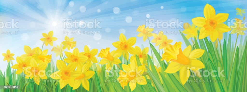 Vector of daffodil flowers on sky background. vector art illustration