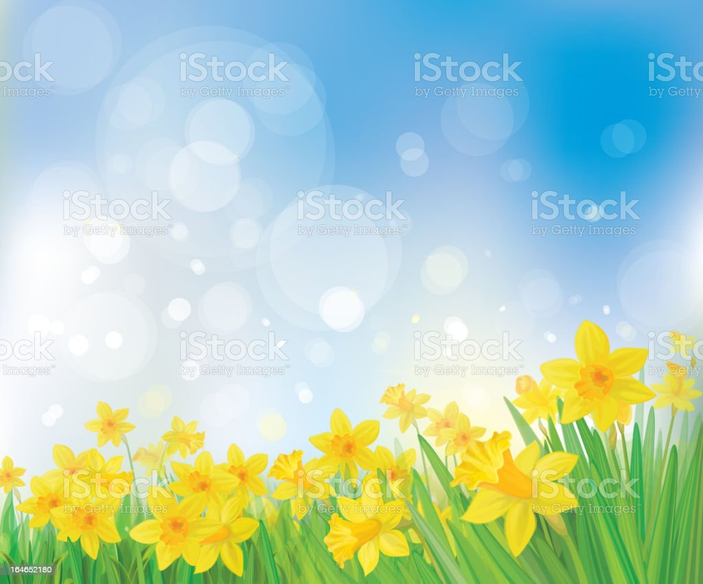 Vector of daffodil flowers on spring  background vector art illustration