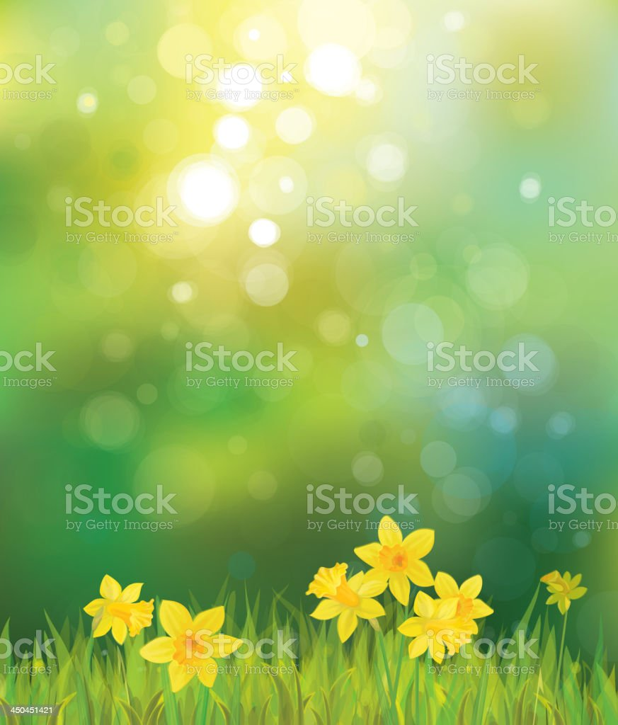 Vector of daffodil flowers on spring background. vector art illustration