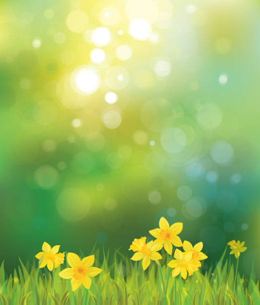 Vector of daffodil flowers on spring background. Background is my creative handdrawing and you can use it for spring, summer, Easter design and etc, made in vector, Adobe Illustrator 10 EPS file, transparency effects used in file. daffodil stock illustrations