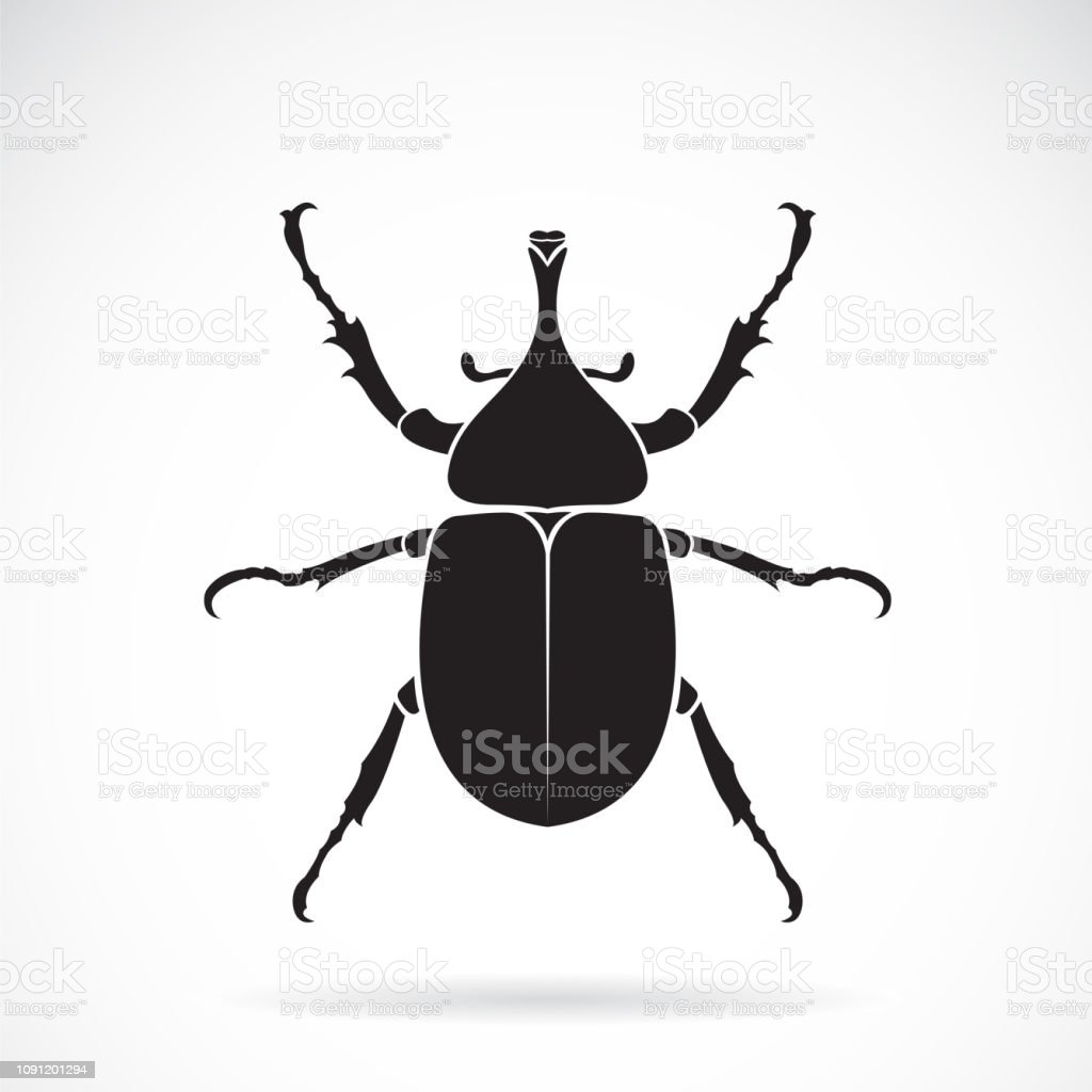 Vector of dynastinae on a white background. Insect. Animal. Beetle....