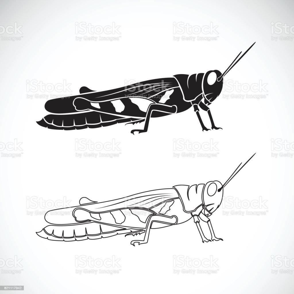 Vector of grasshopper on white background. Insect Animal. vector art illustration