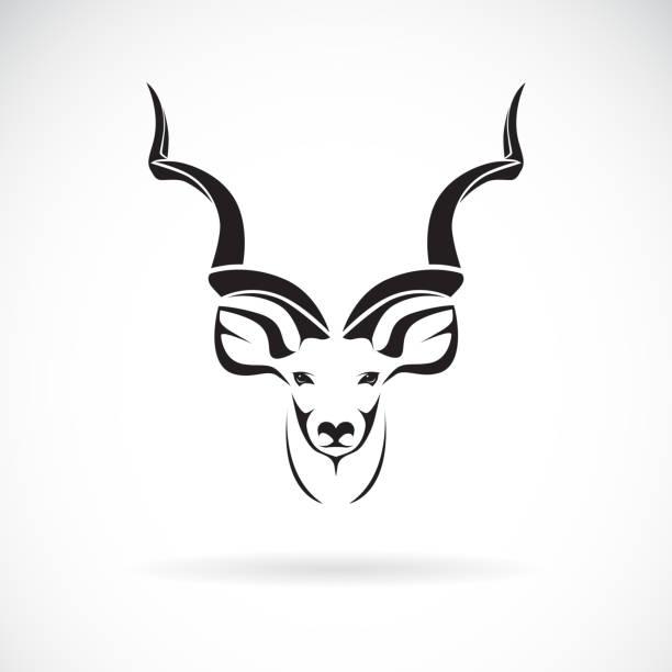stockillustraties, clipart, cartoons en iconen met vector van grotere koedoe hoofd ontwerp op witte achtergrond, wilde dieren. gemakkelijk bewerkbaar gelaagde vectorillustratie. - antilope