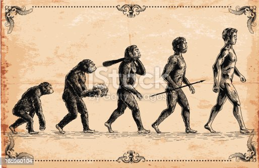 Vector picture of Human Evolution