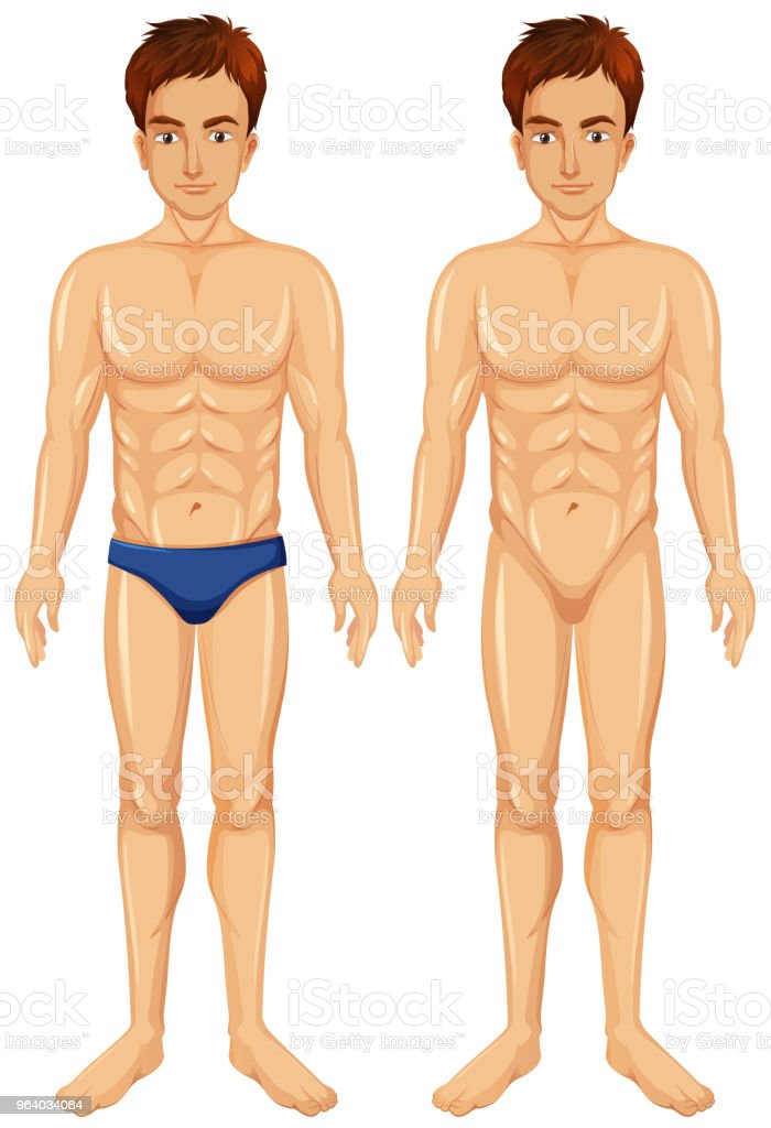 A  Vector of Male Body - Royalty-free Adult stock vector