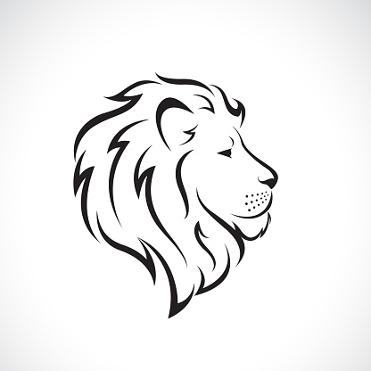 Vector of male lion head design on a white background., Wild Animals. Easy editable layered vector illustration.