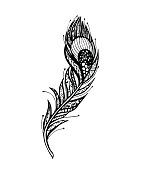 Vector of Peacock Feather