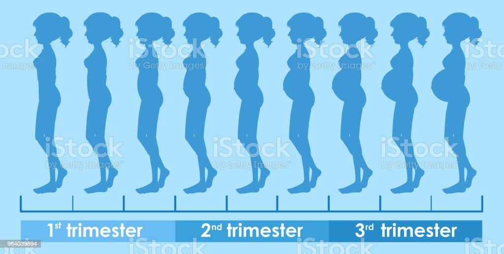 A Vector of Pregnancy Progress - Royalty-free Adult stock vector