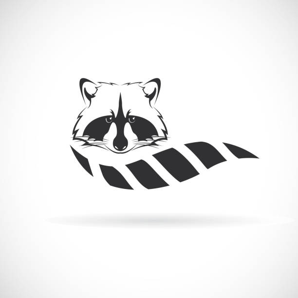 Vector of raccoon design on white background. Wild Animals. Raccoon logo or icon. Easy editable layered vector illustration. Vector of raccoon design on white background. Wild Animals. Raccoon logo or icon. Easy editable layered vector illustration. raccoon stock illustrations