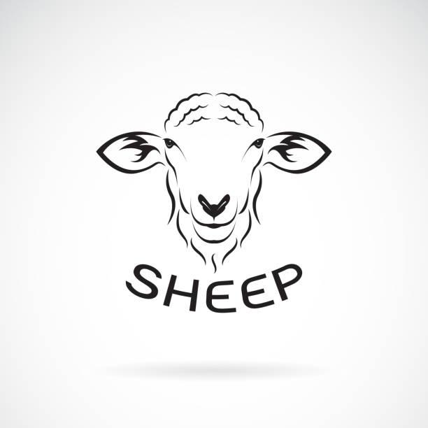 stockillustraties, clipart, cartoons en iconen met vector van schapen hoofd ontwerp op witte achtergrond. wilde dieren. gemakkelijk bewerkbaar gelaagde vectorillustratie. - schaap