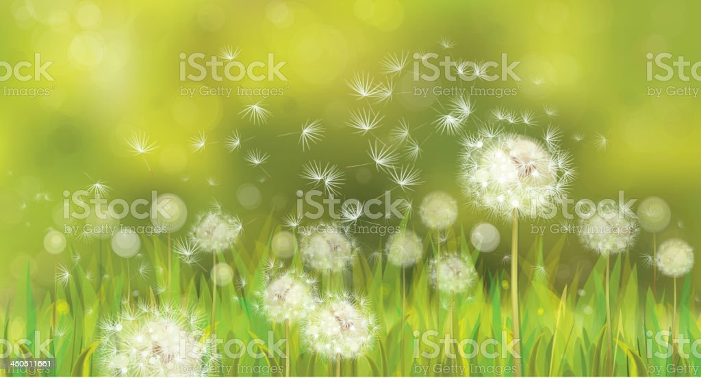 91aff97d8059f Vector of spring background with white dandelions. royalty-free vector of spring  background with