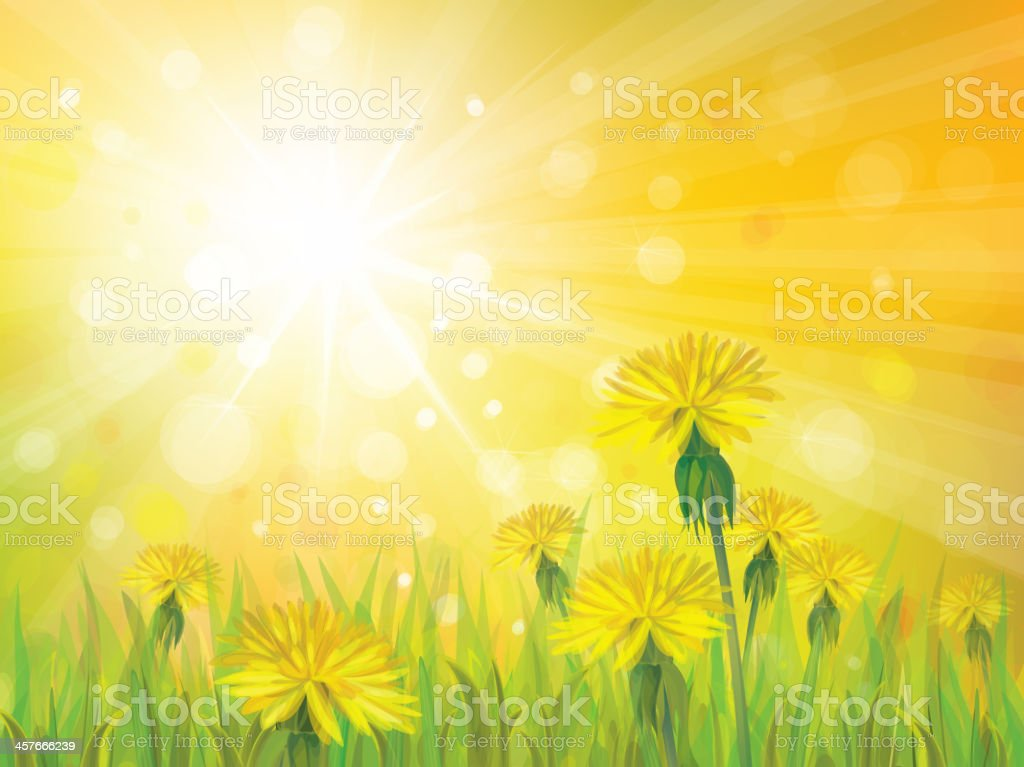 Vector of spring background with yellow dandelions. royalty-free stock vector art