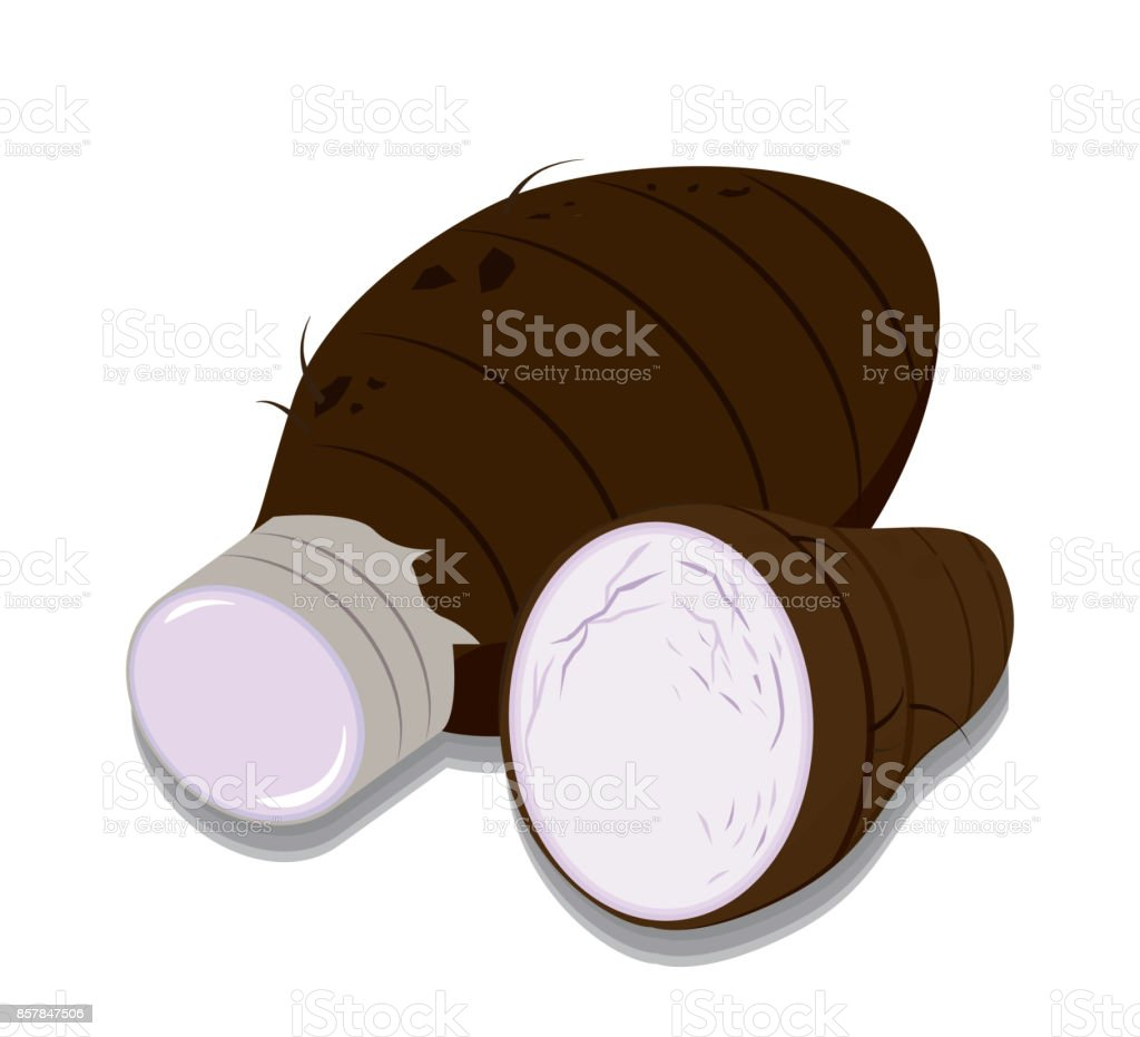 Vector of Taro vector art illustration