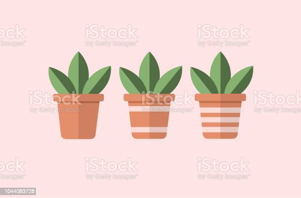 Vector of three square flower pots with succulent plants with simple vector id1044083728?b=1&k=6&m=1044083728&s=612x612&h=dmy7jgm6lxypjxareoaf5gco2xg9e67h3ckyfc5kdok=