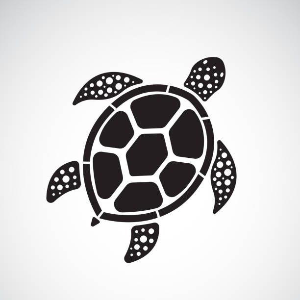 illustrazioni stock, clip art, cartoni animati e icone di tendenza di vector of turtle design on a white background. reptile. animals. easy editable layered vector illustration. - tartaruga