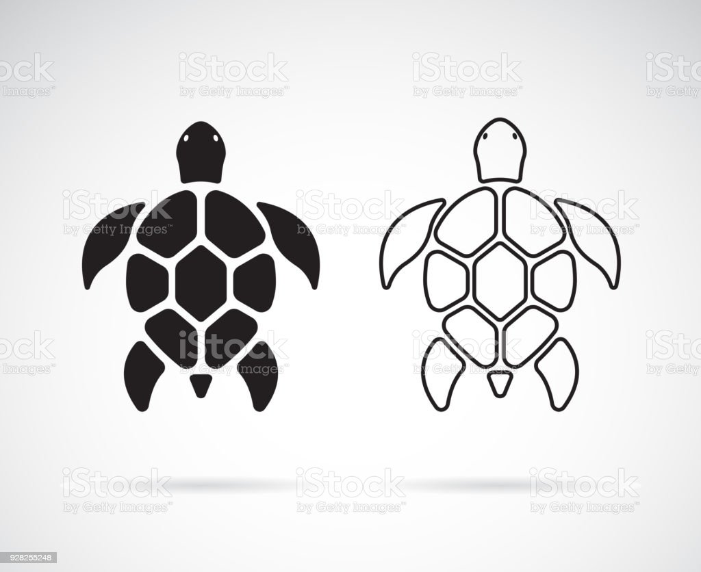 Vector of turtle design on a white background. Reptile. Animals. Easy...