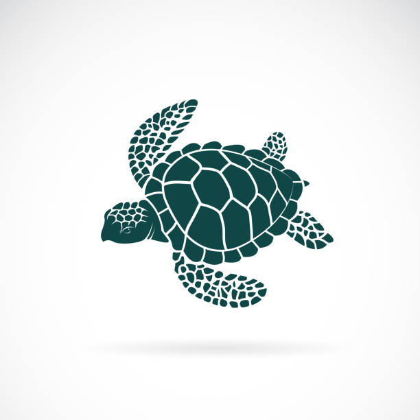 Vector of turtle design on a white background. Wild Animals. Underwater animal. Turtle icon or logo. Easy editable layered vector illustration. Vector of turtle design on a white background. Wild Animals. Underwater animal. Turtle icon or logo. Easy editable layered vector illustration. turtle stock illustrations