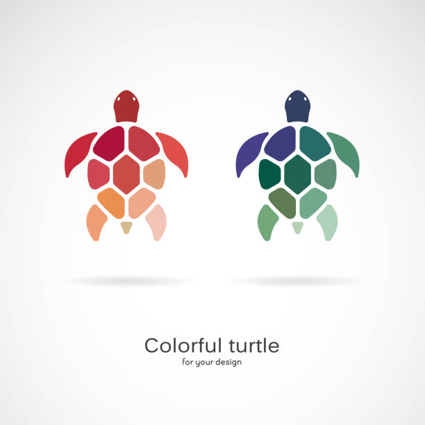 Vector of two colorful turtles on white background. Wild Animals. Underwater animal. Turtle icon or logo. Easy editable layered vector illustration. Vector of two colorful turtles on white background. Wild Animals. Underwater animal. Turtle icon or logo. Easy editable layered vector illustration. turtle stock illustrations