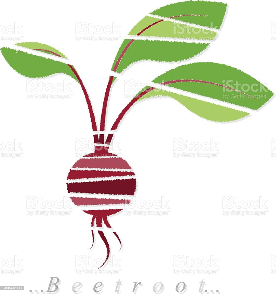 Vector of vegetable, beetroot icon vector art illustration