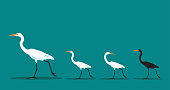 Vector of walking bird on blue background, Difference concept. Animal Idea.