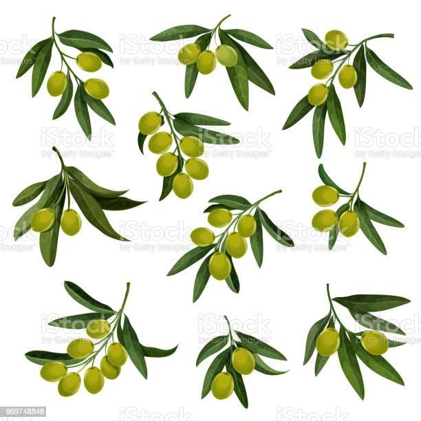 Vector olives icons for extra virgin olive oil vector id959748848?b=1&k=6&m=959748848&s=612x612&h=tqa70io pwz6ioyyxhcvpy5xks12tlfpfpeuo0mglsk=