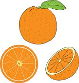 Vector orange, orange slice vector illustration