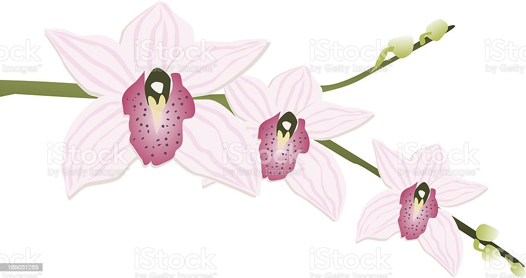 Vector Orchid 3 royalty-free stock vector art