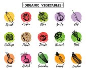 Vector organic vegetables cards set. Farm eco products tags collection. Hand sketched greens illustration.