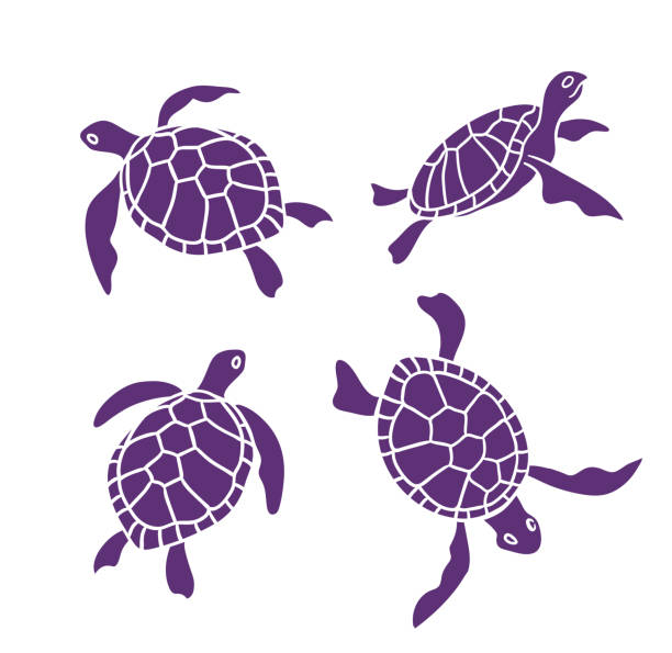 vector ornamental ocean turtles on the white background. design elements. - turtle stock illustrations