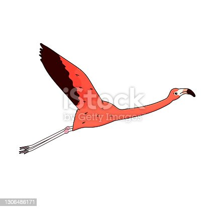istock Vector outline cartoon pink peach flamingo isolated on white background. Doodle animal spreads its wings and flies. 1306486171