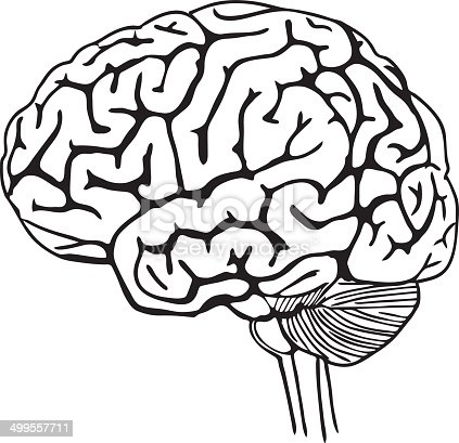 Vector Outline Illustration Of Human Brain Stock Vector ...