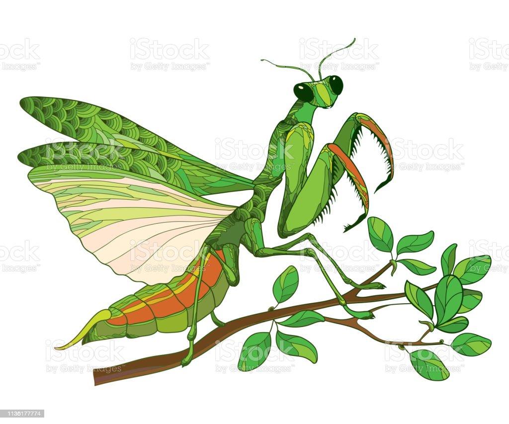 Vector Outline Mantis Religiosa Or Praying Mantis In Green Sitting
