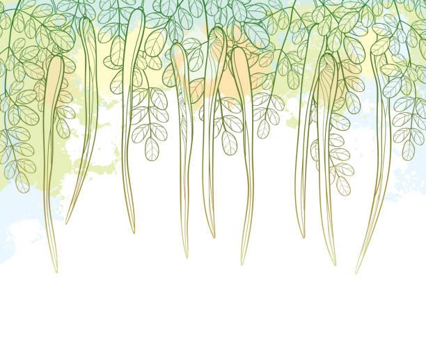 vektor-gliederung moringa oleifera oder drumstick oder meerrettich zweig mit schoten und kunstvolle laub in pastell grün auf der strukturierten hintergrund. - wunderbaum stock-grafiken, -clipart, -cartoons und -symbole
