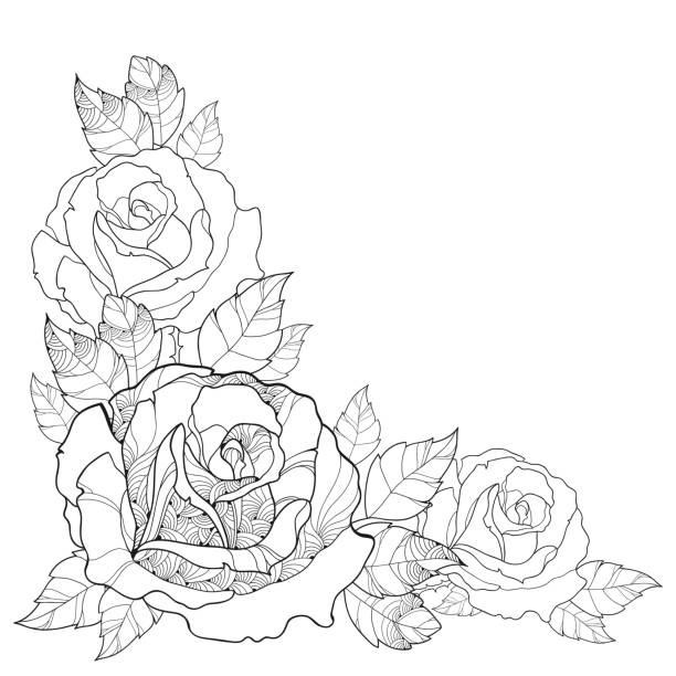 Top 60 Three Roses Clip Art, Vector Graphics and Illustrations - iStock