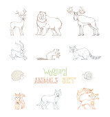 Vector outlined set of wild woodland animals.