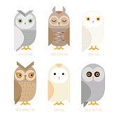 Vector owl set
