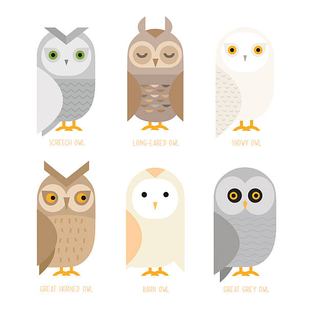 vector owl set - great horned owl stock illustrations, clip art, cartoons, & icons