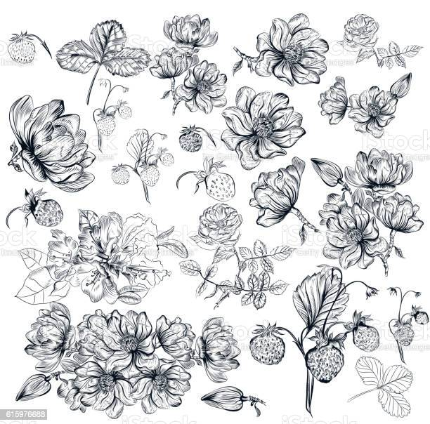Vector pack of engraved high detailed flowers for design vector id615976688?b=1&k=6&m=615976688&s=612x612&h=3qasia2xtim7nc1smypkydxx5awevtcigtxsuugjytg=