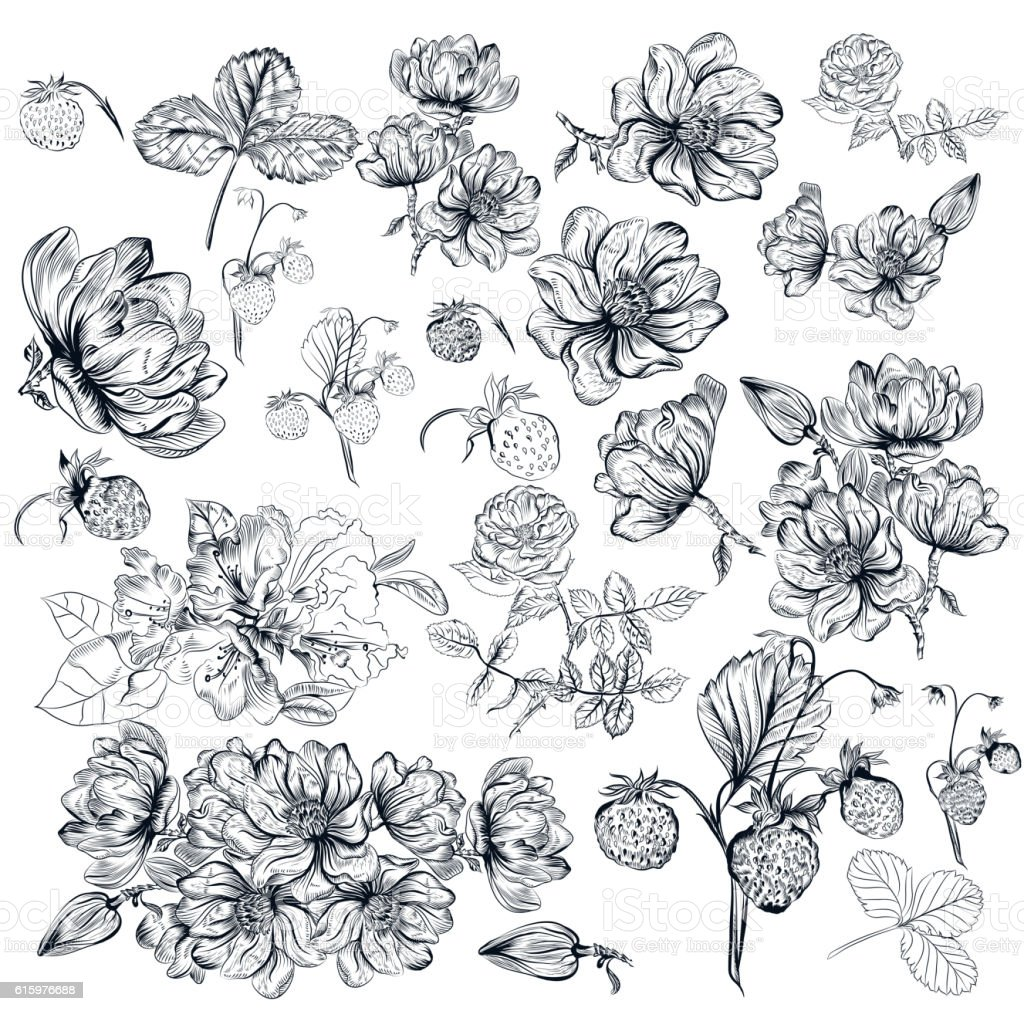 Vector pack of engraved high detailed flowers for design - Illustration vectorielle