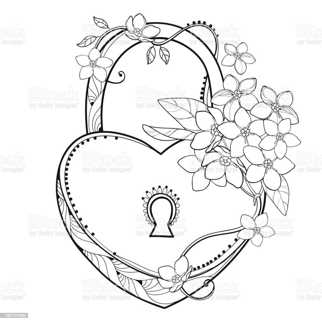 Coloriage Fleur Myosotis.Coeur Cadenas Vector Avec Bouquet De Contour Ne Me Noubliez Pas Ou