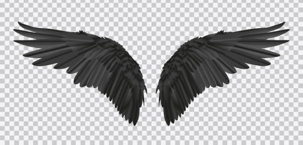 vector pair of black realistic wings on transparent background - animal wing stock illustrations
