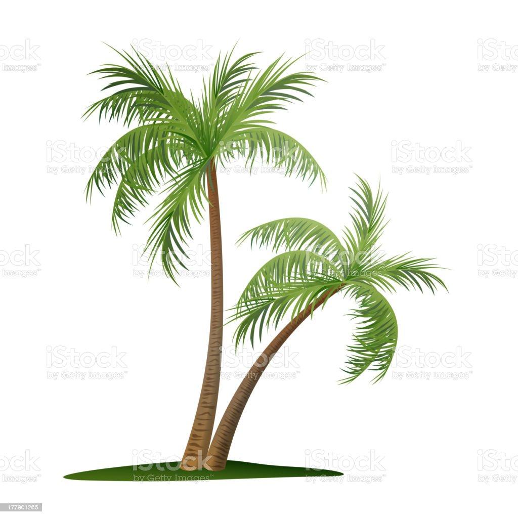 Vector palm trees illustration on white royalty-free stock vector art