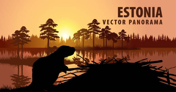vector panorama of Estonia with beaver vector panorama of Estonia with beaver beaver stock illustrations