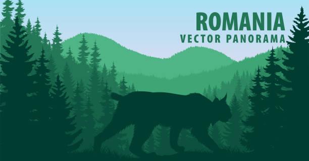 vector panorama of Romania with wild bobcat lynx vector panorama of Romania with wild bobcat lynx bobcat stock illustrations