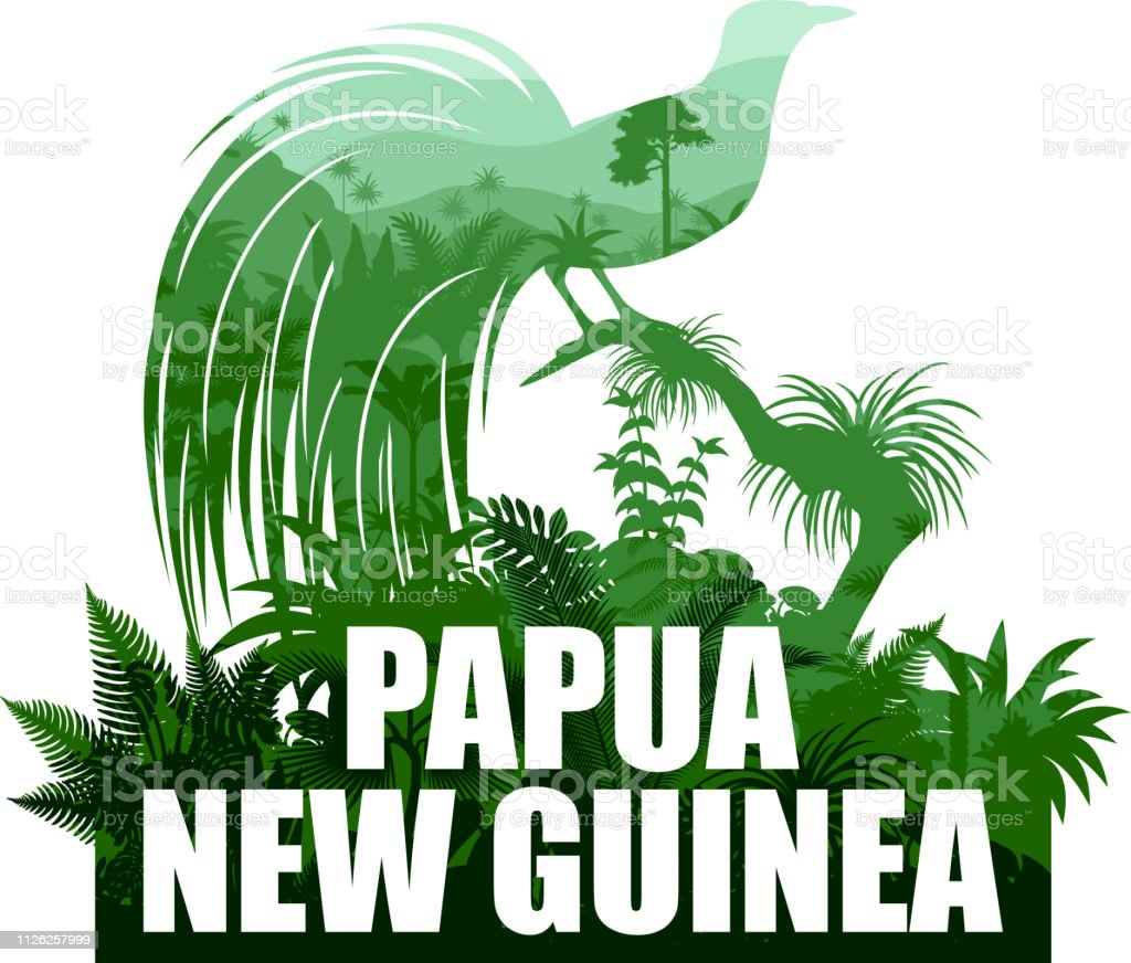 vector Papua New Guinea illustration with lesser bird of paradise vector art illustration