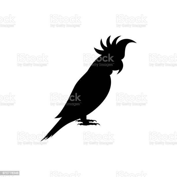 Vector parrot vector id970778346?b=1&k=6&m=970778346&s=612x612&h=2ddy1nm4qgqgjebdzkor ilrgrczu5rljsxrkc930sk=