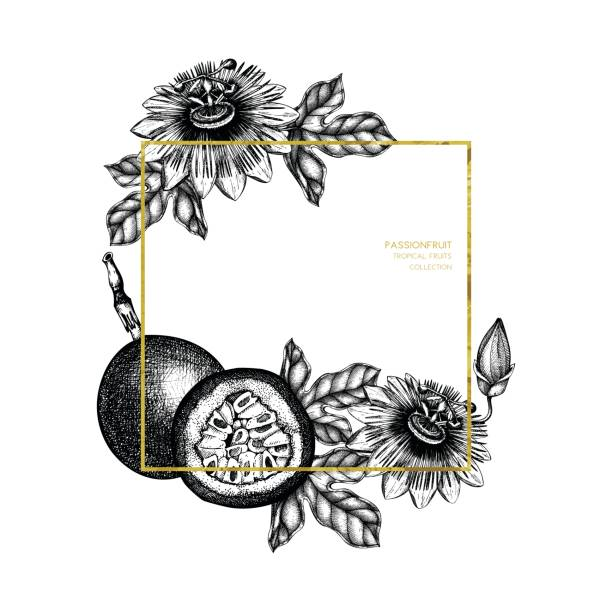 illustrations, cliparts, dessins animés et icônes de carte de fruits de la passion de vecteur - fruit de la passion
