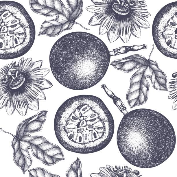 illustrations, cliparts, dessins animés et icônes de motif de fruits de la passion de vecteur - fruit de la passion