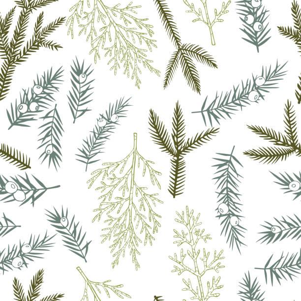 stockillustraties, clipart, cartoons en iconen met vectorpatroon met kerstplanten. - pinaceae