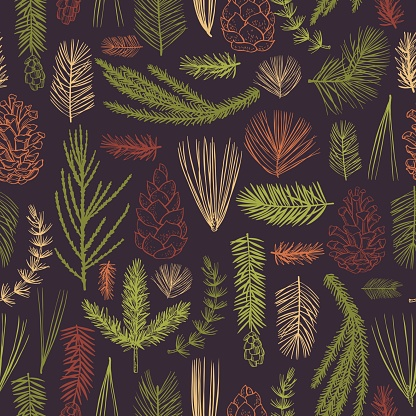 Vector   pattern with Christmas plants